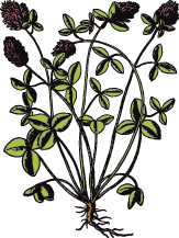 Fairsing Vineyard | Clover