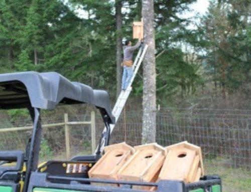 Kestrel and Screech Owl Nesting Boxes at Fairsing Vineyard