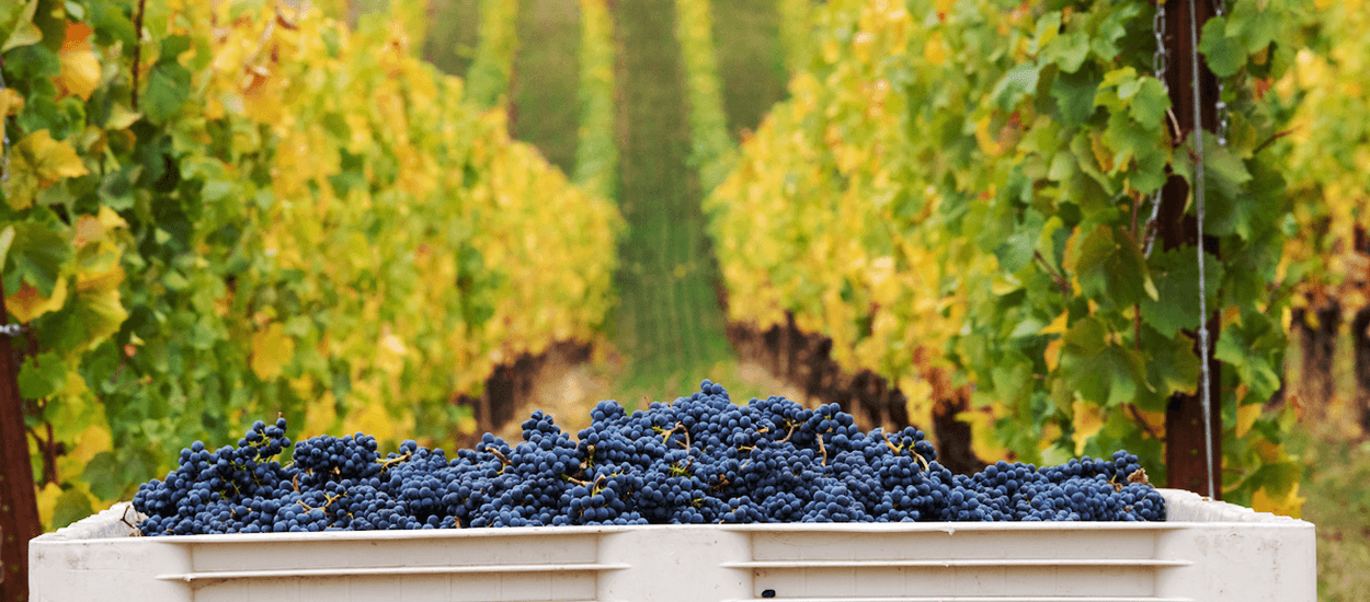 The Beauty and Bounty of Fairsing Vineyard in Oregon's Willamette Valley