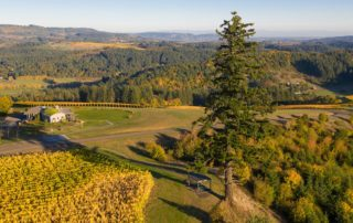 Fairsing Vineyard nestled within a Certfied Family Forest in Oregon's Willamette Valley