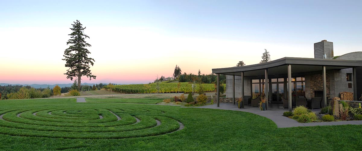 The Douglas fir tree at Fairsing Vineyard enjoys view of the tasting room and coastal range at sunset
