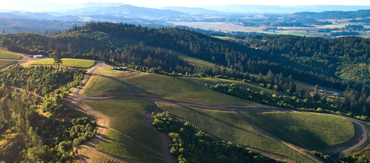 A birds eye view of Fairsing Vineyard looking north with Mt St Helens on the horizon
