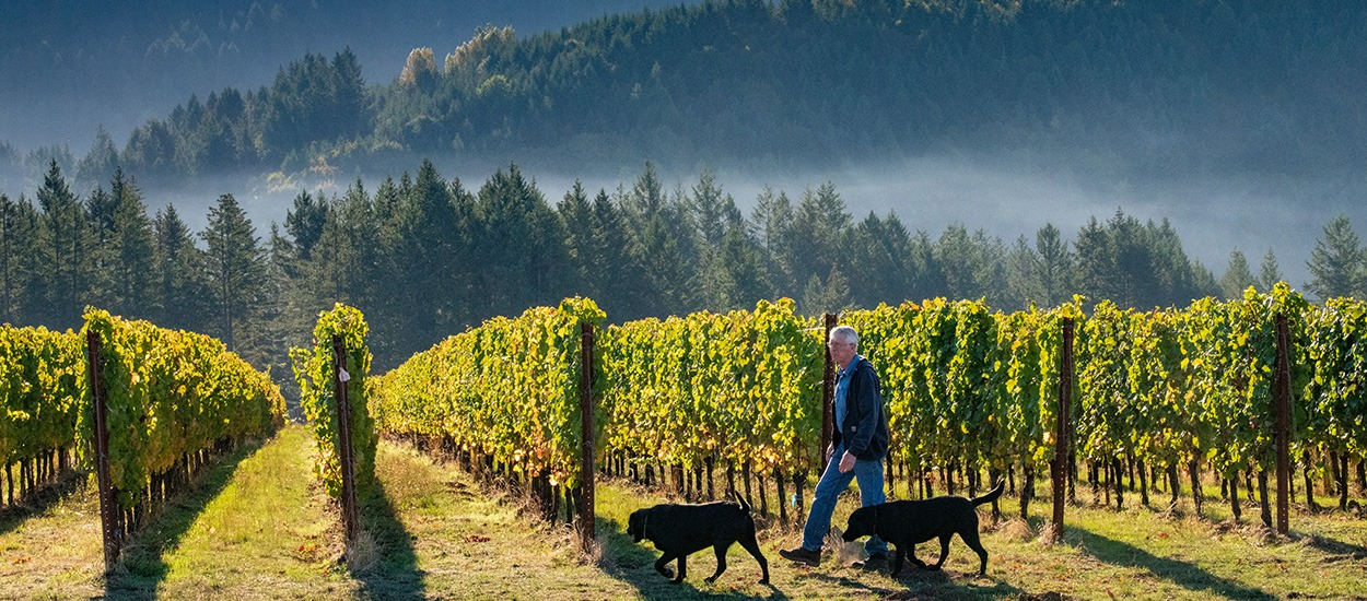 Fairsing Vineyard owner walks among the vines at daybreak with his dogs surrounded by clouds