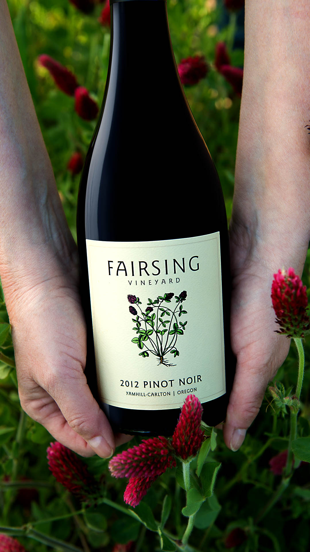 Hands hold a bottle of Fairsing Vineyard Pinot noir with crimson clover on the label surrounded by a blooming clover crop in the vineyard