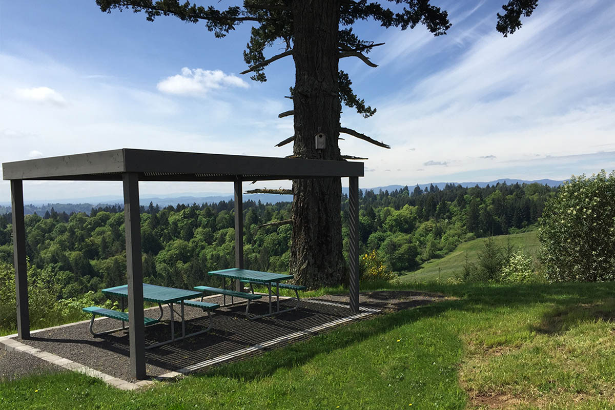 Designated picnic area beneath the old-growth Douglas fir tree at Fairsing Vineyard in Oregon's Willamette Valley