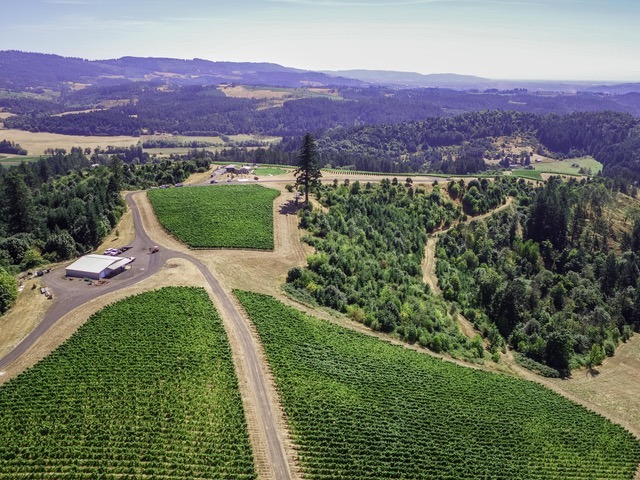 An aerial view of the vines and forest at Fairsing Vineyard in Oregon's Willamette Valley