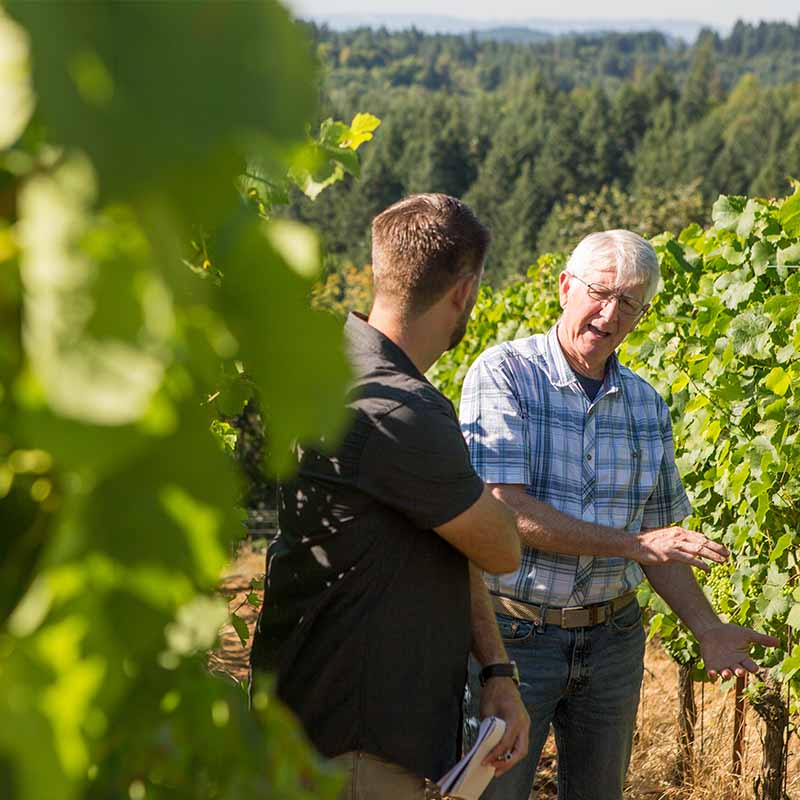 Fairsing Vineyard co-owner Mike McNally guides a visitor in the vines in Oregon's Willamette Valley