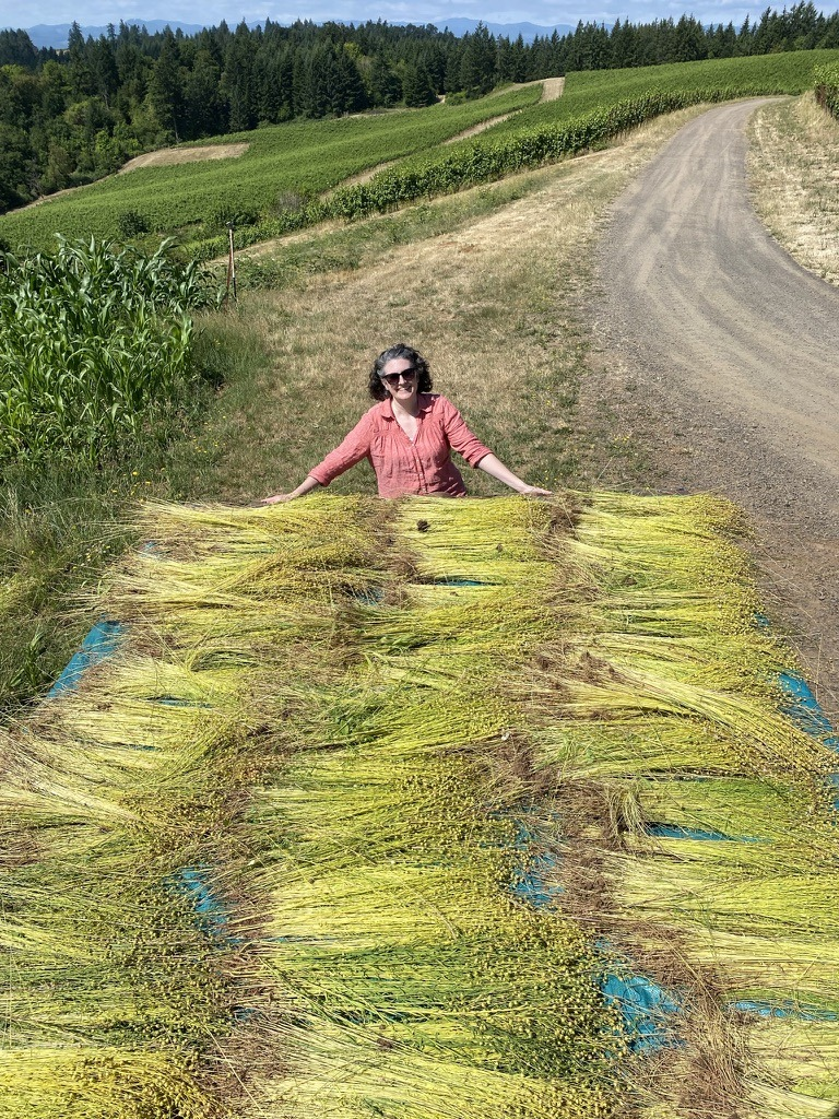 Happy harvester with swathes of fiber flax at Fairsing Vineyard in Oregon's Willamette Valley