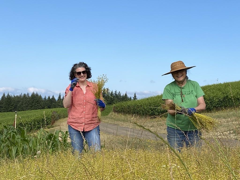 Fairsing team members pulling fiber flax in July of 2021 beneath sunny skies in Oregon's Willamette Valley