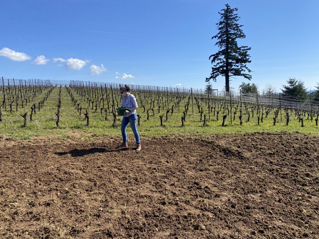 A woman broadcasts fiber flax seeds on a plot of soil at Fairsing Vineyard in Oregon's Willamette Valley