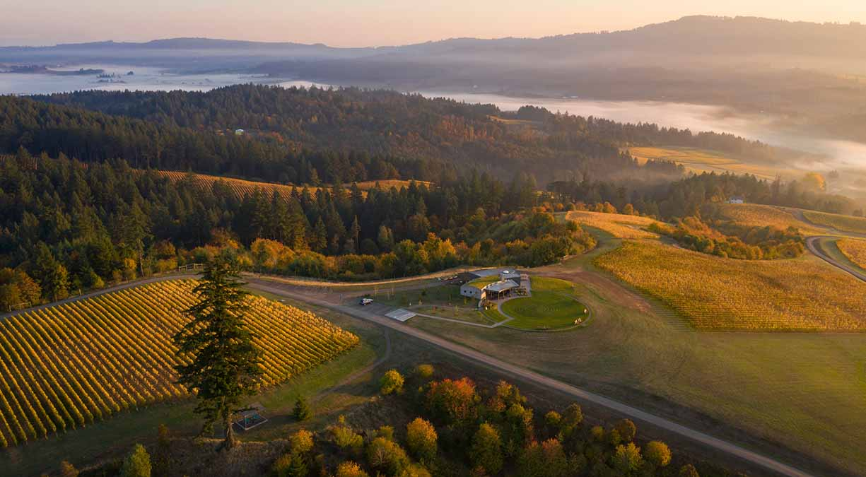 A view of Fairsing Vineyard and golden vines at dawn with wispy clouds above Oregon's Willamette Valley